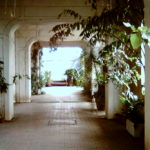 熱帯植物の回廊(熱帯鳥温室内)